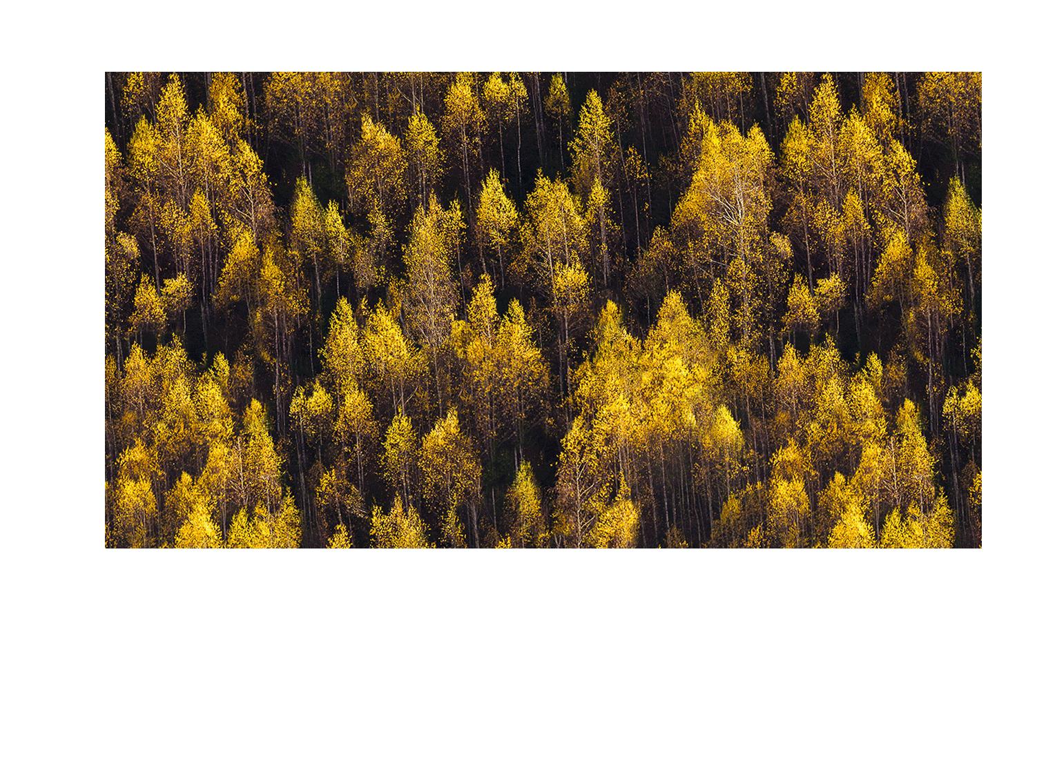 باربارا | محصولات مراقبت از پوست و مو